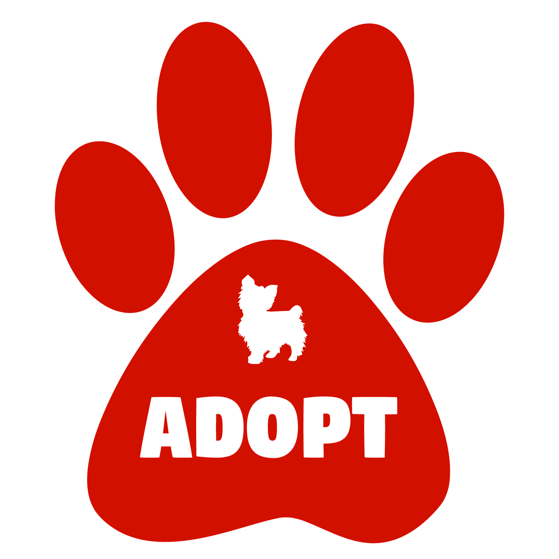 Accepting Adopted Pet: Best Guide & Tips to Win New Family Member!