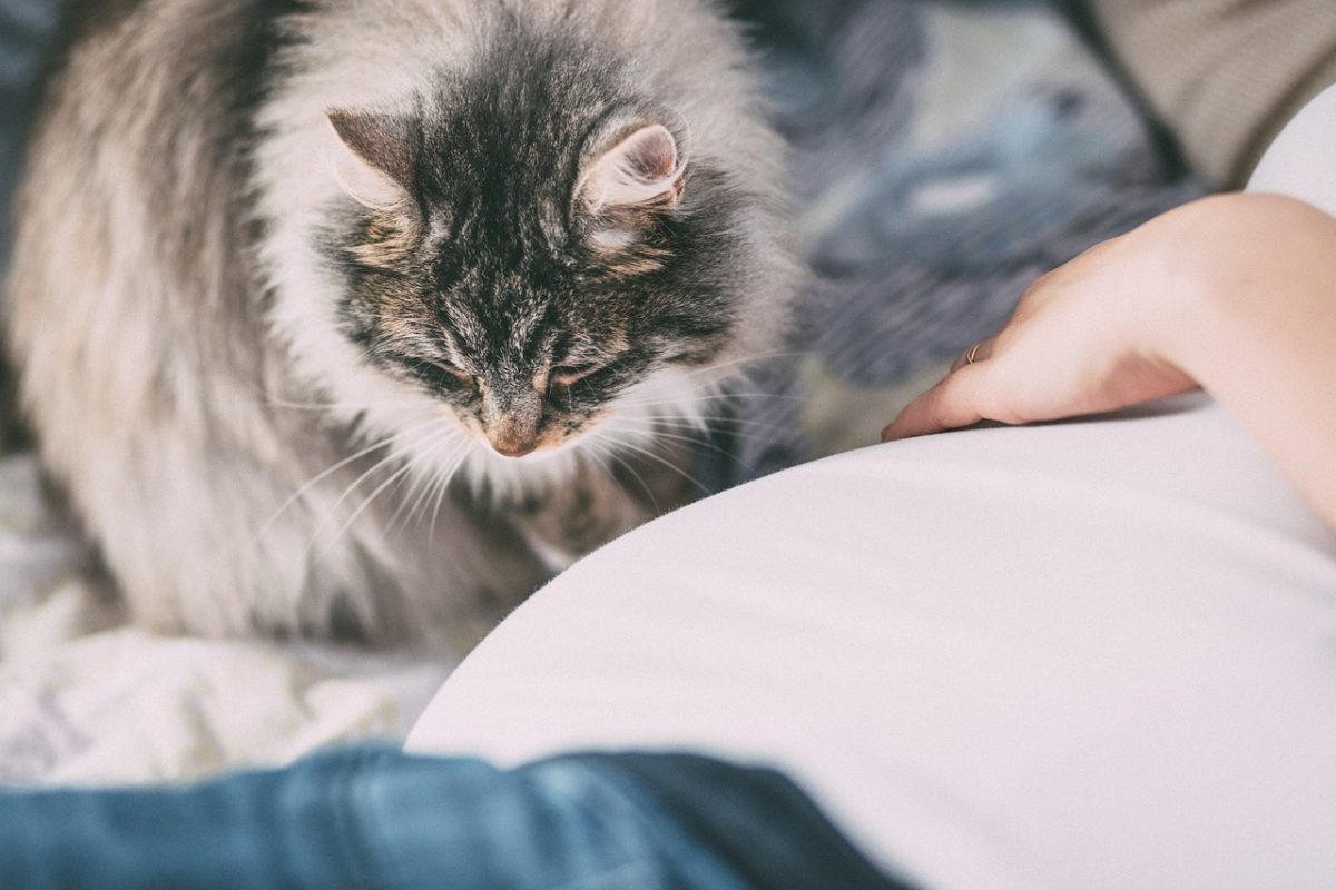 Pet Allergies: All-Year Round Diseases and Exposures Prevention